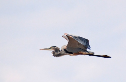 GBH Fly 2