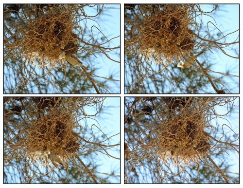 Nest x 4