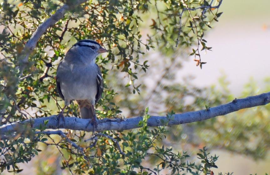 WC Sparrow 2
