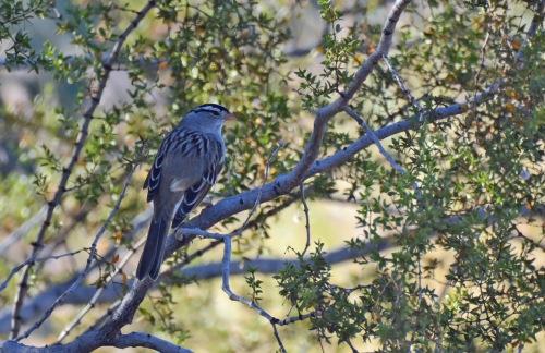 WC Sparrow