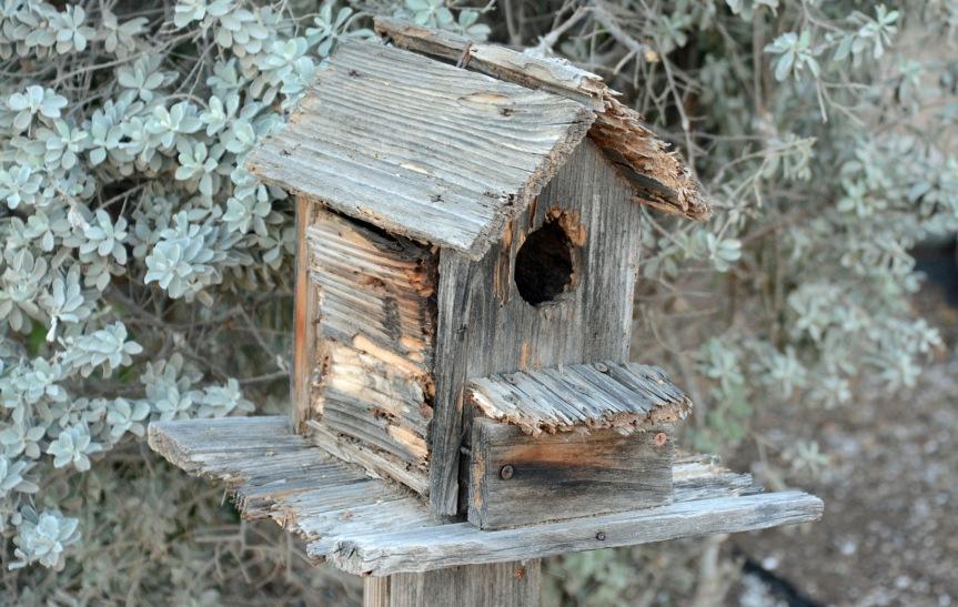 Birdhouse_edited-1