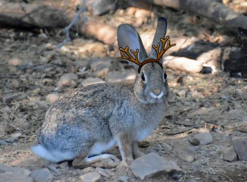 Bun Antlers