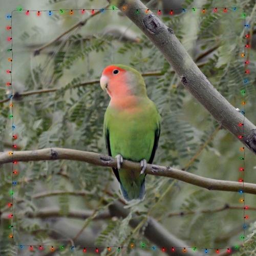 Lovebird with lights