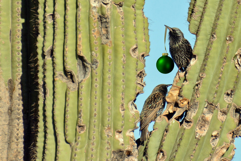 Starlings in Cactus with ornament_edited-2