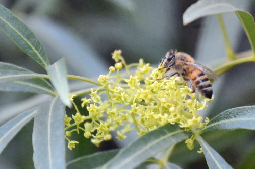 Bee 1.10.15
