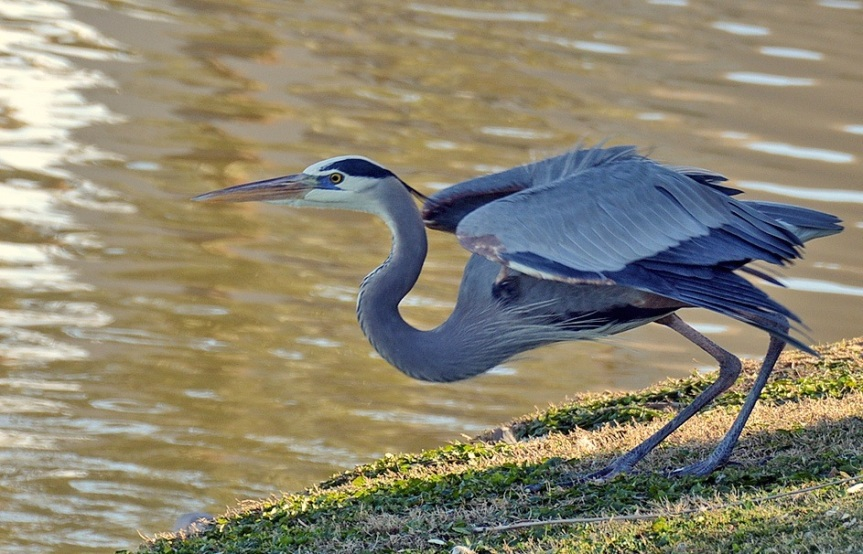 GBH Crouch 12.30.14