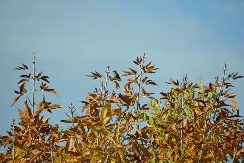 Hum Autumn 2