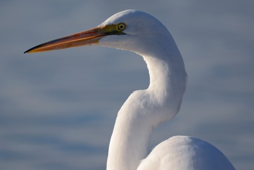 Egret Profile