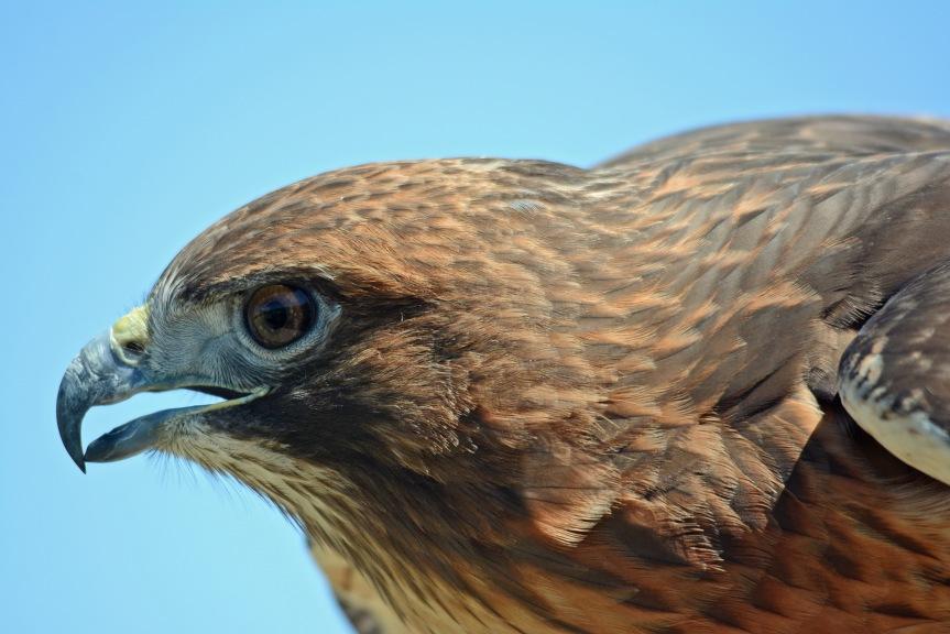 Hawk 13
