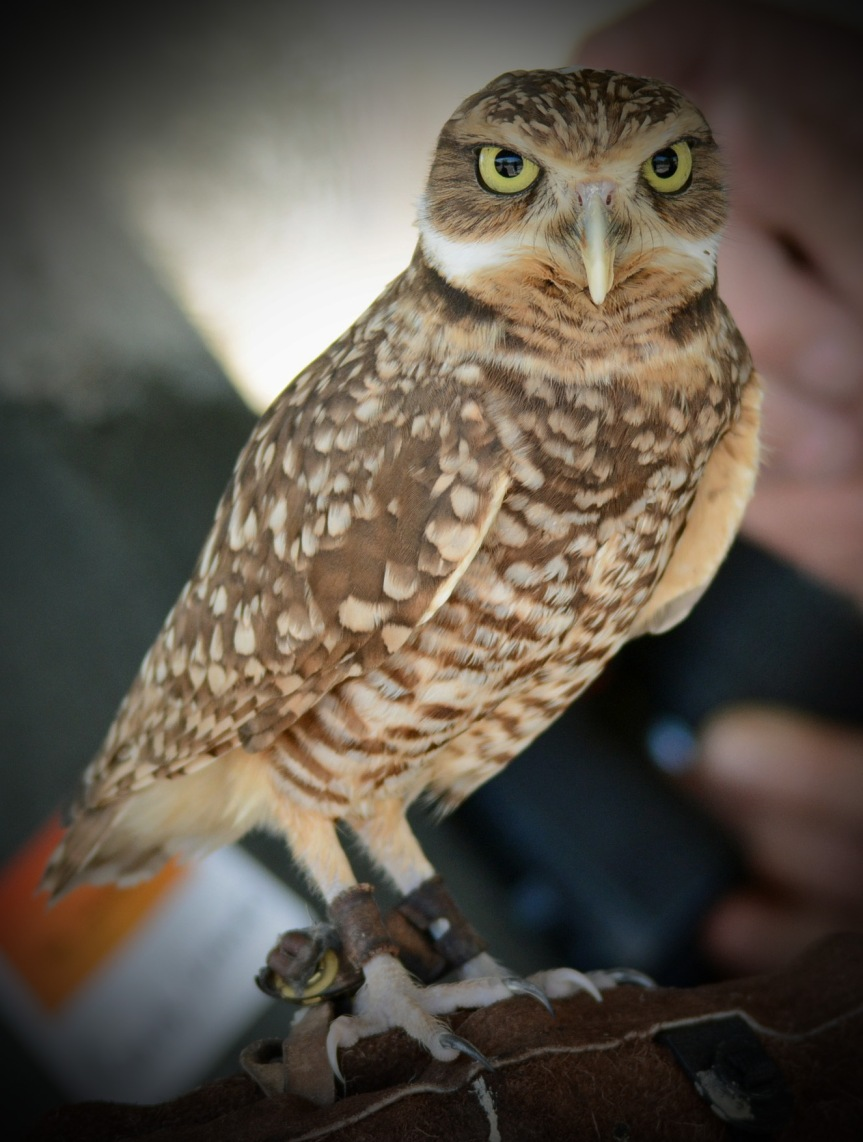 Owl Full_edited-1