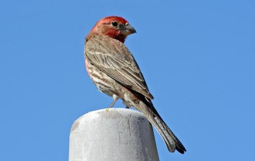 Finch Boy
