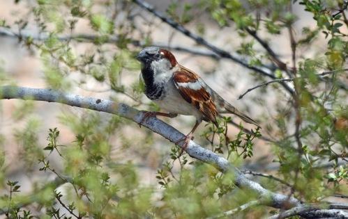 Sparrow 2_edited-1