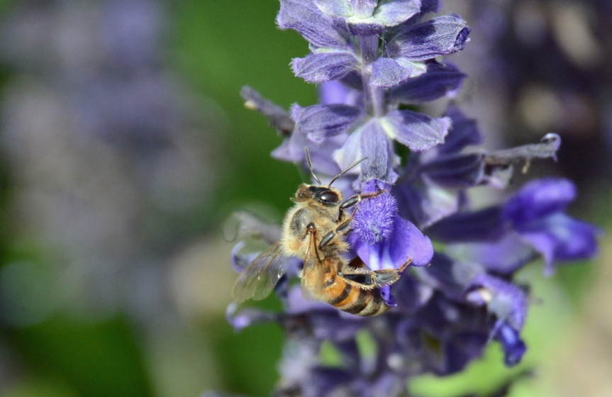 Bee Purp