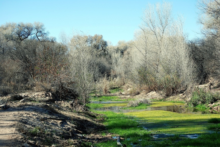 Hassayampa River Preserve, early spring
