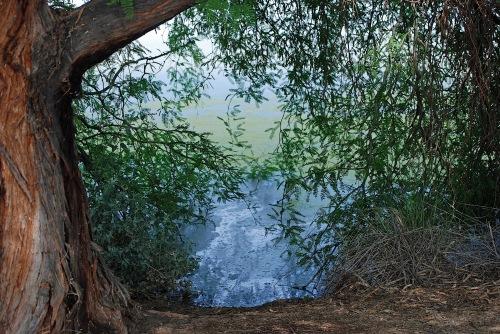 Gilbert Riparian Preserve at Water Ranch