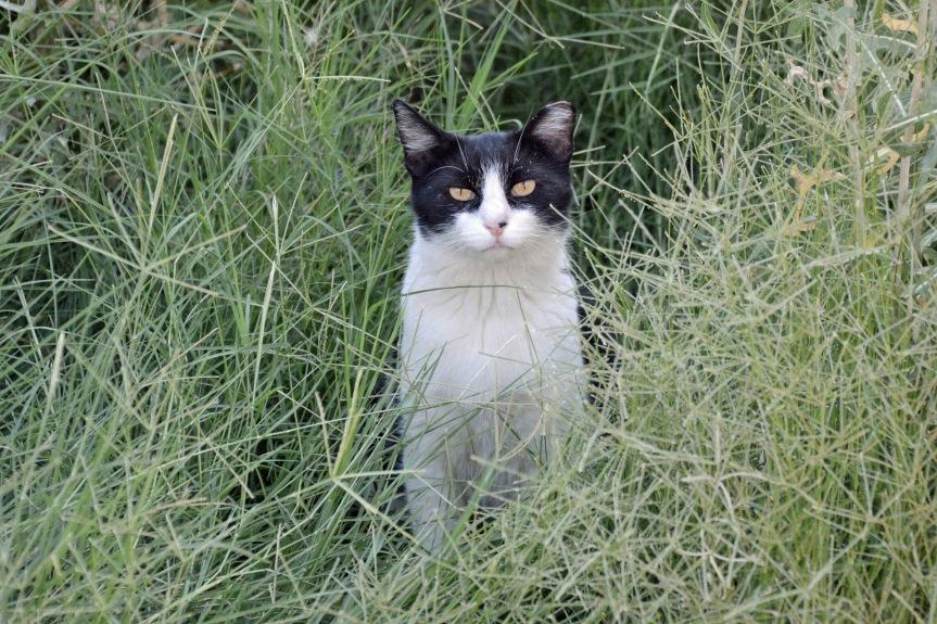 I Grass