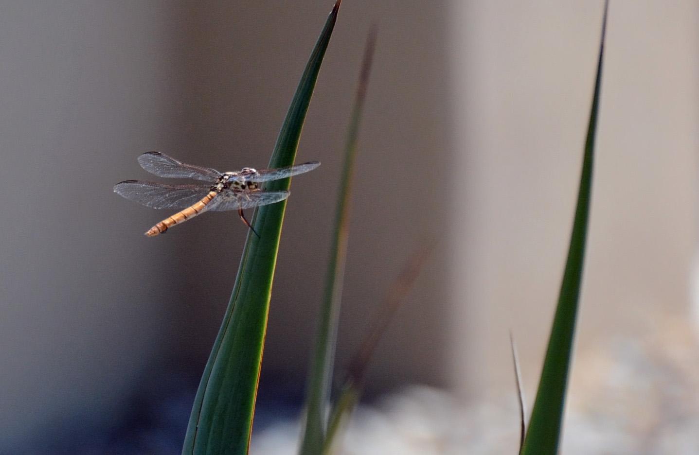 Dragonfly 8.8.15_edited-1
