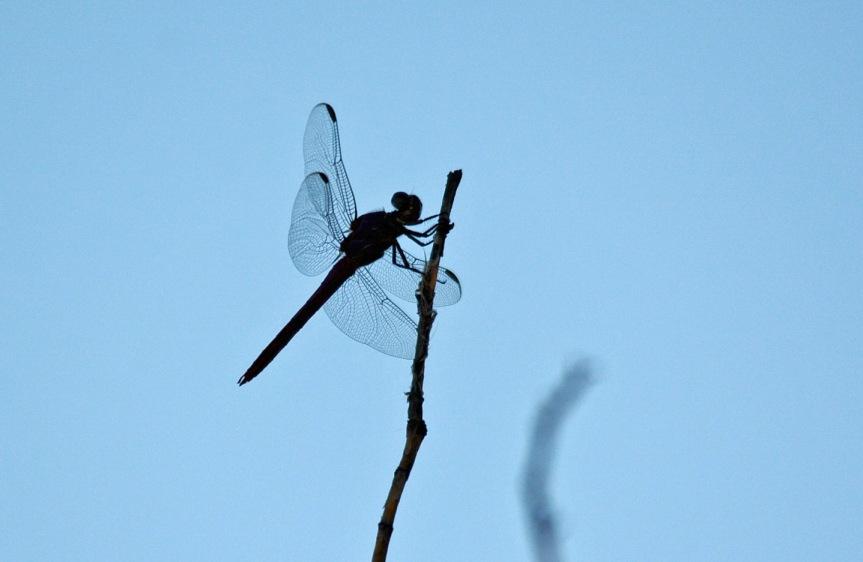 Dragonfly 9.11.15