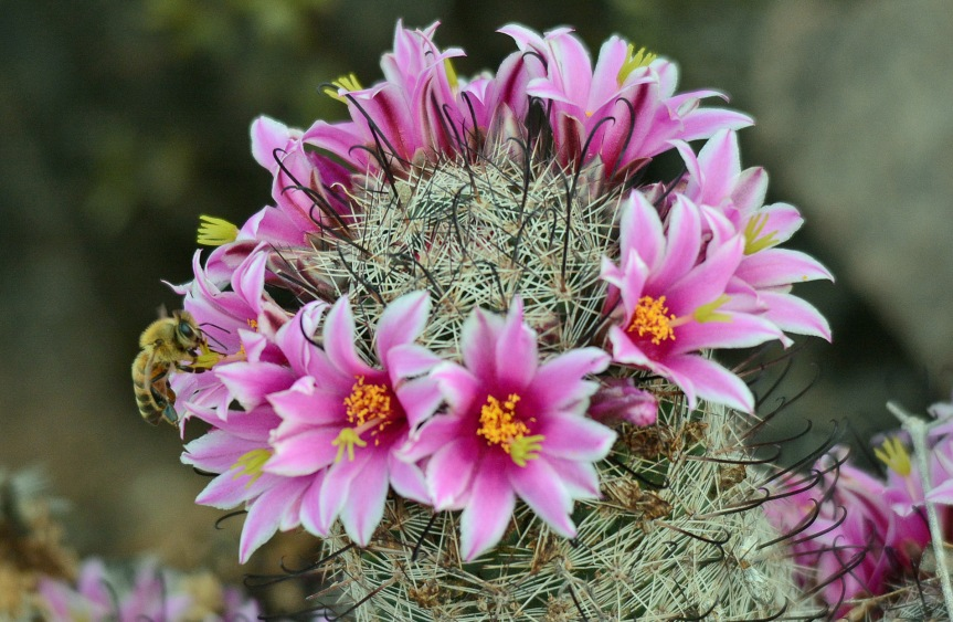 Fishhook Flowers