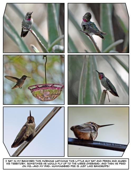 Hummingbird Pee Story