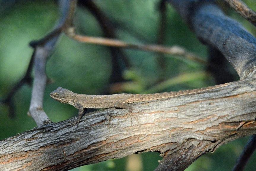 Lizard 8.30.15