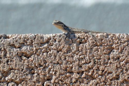 Lizard 10.31.15