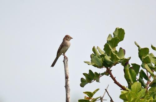 Sparrow 2a