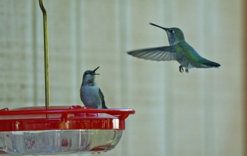 Hummers 2 11.2.15
