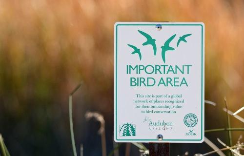 Imp Bird Area_edited-1