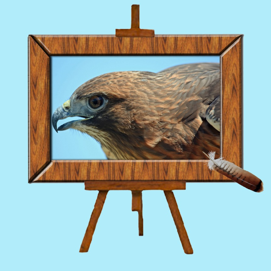 Hawk Easel Feather Blue