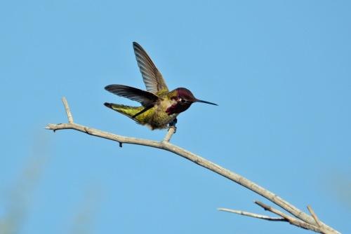 Hum Fly