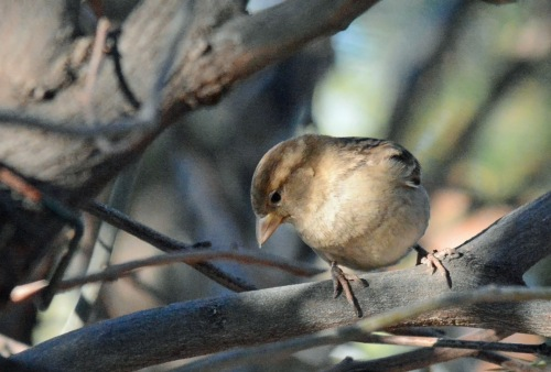 Sparrow 1.2.16