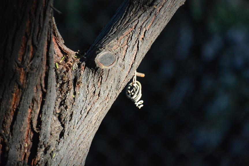 Tree Thang