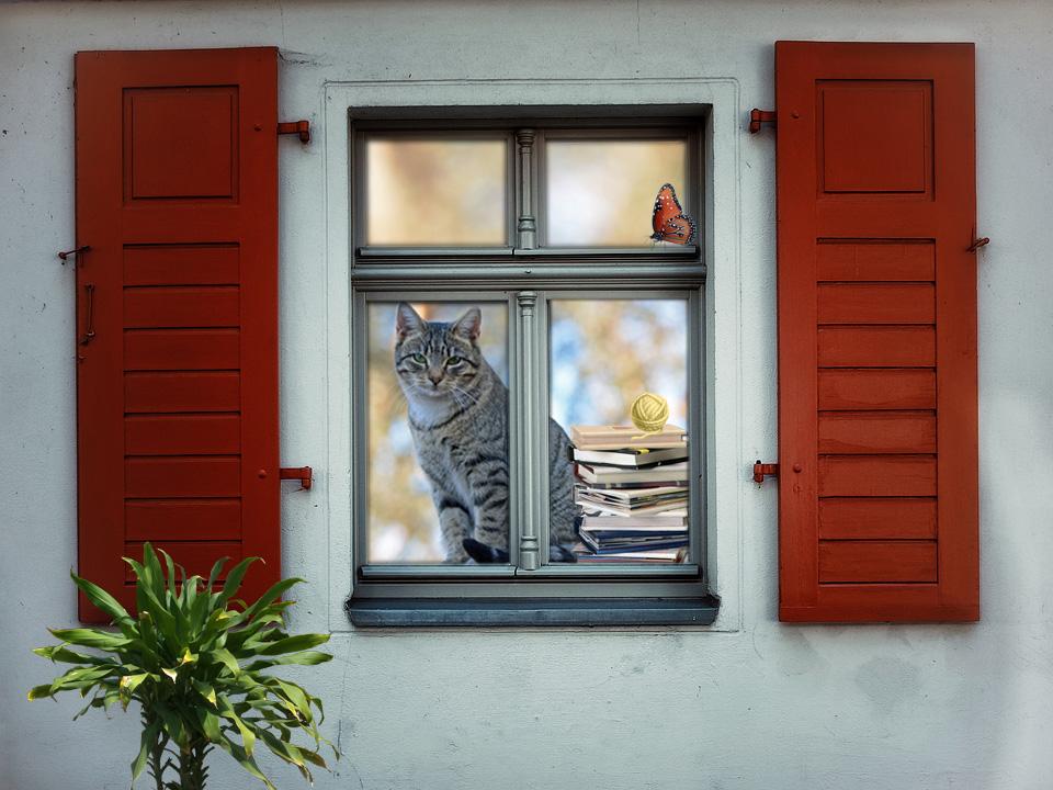 Window Cat_edited-1