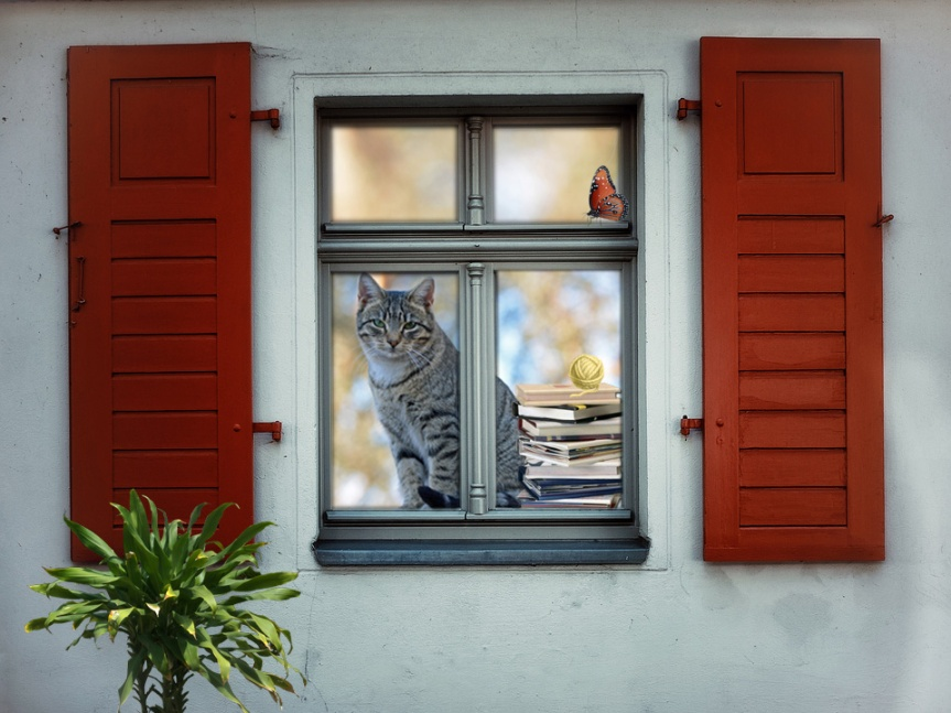 Window Cat_edited-1