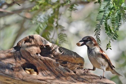Sparrow 2.10.16