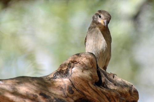 Sparrow F Perch 2