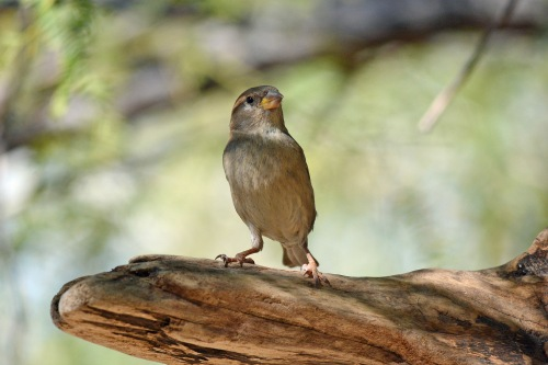 Sparrow F Perch_edited-1