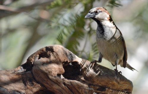 Sparrow Perch 2.10.16