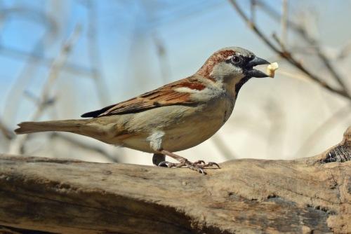 Sparrow Perch 2.12.16