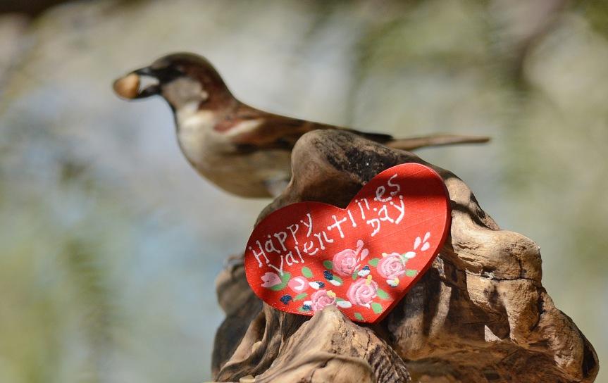 Sparrow VD