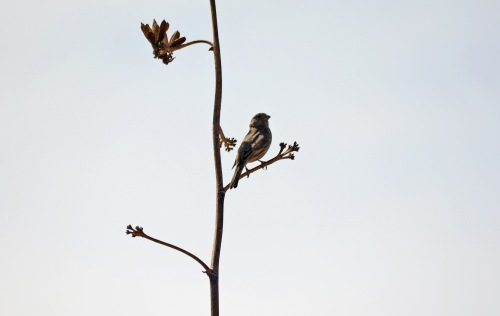 Finch Minimalist