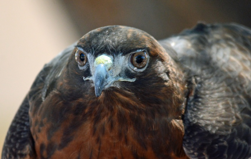 RT Hawk 5