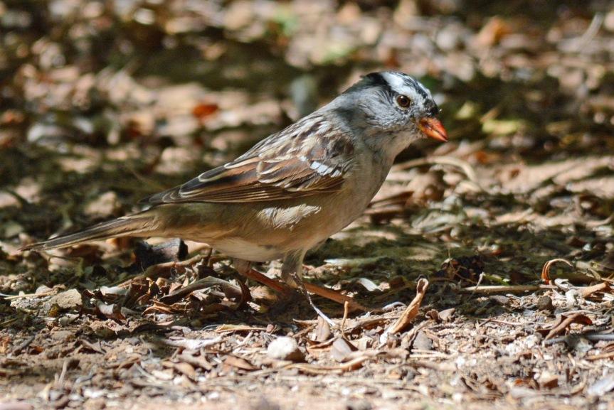 WC Sparrow 3.27.16
