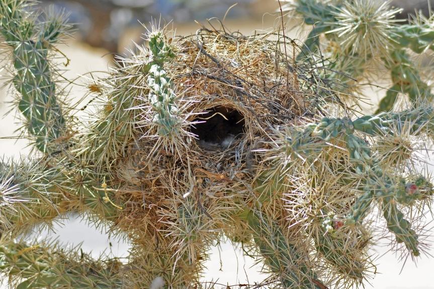 CW Nest