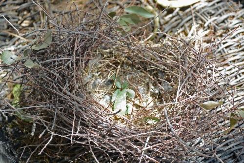 Mock Nest