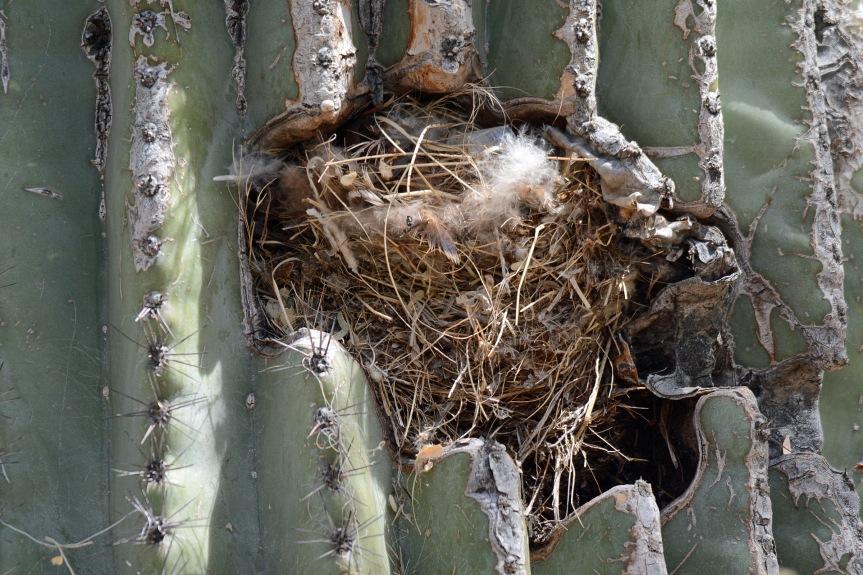 Sag Nest