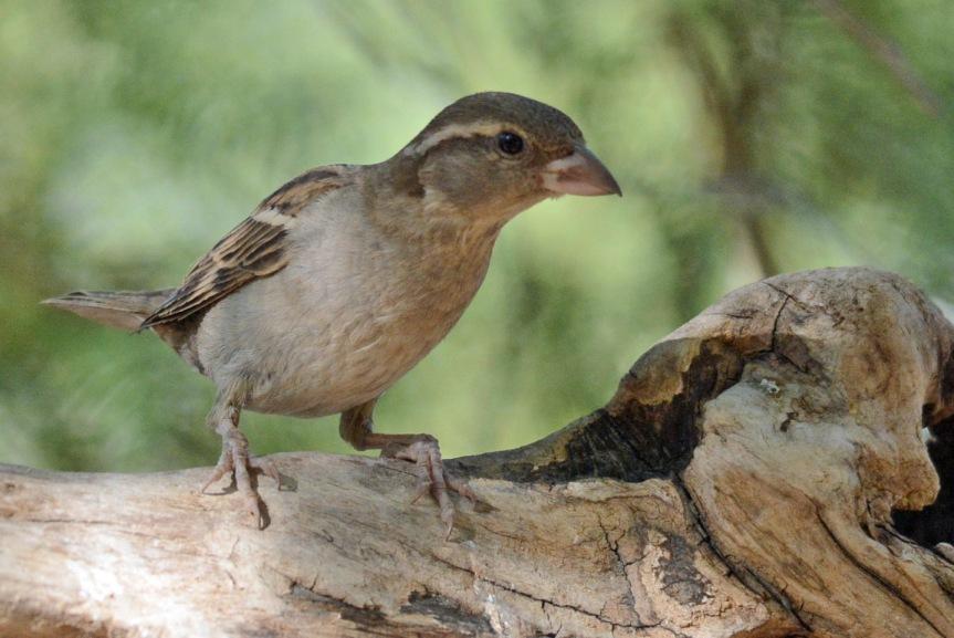 Sparrow 6.16.16