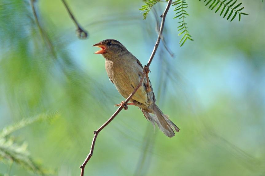 Sparrow 6.17.16