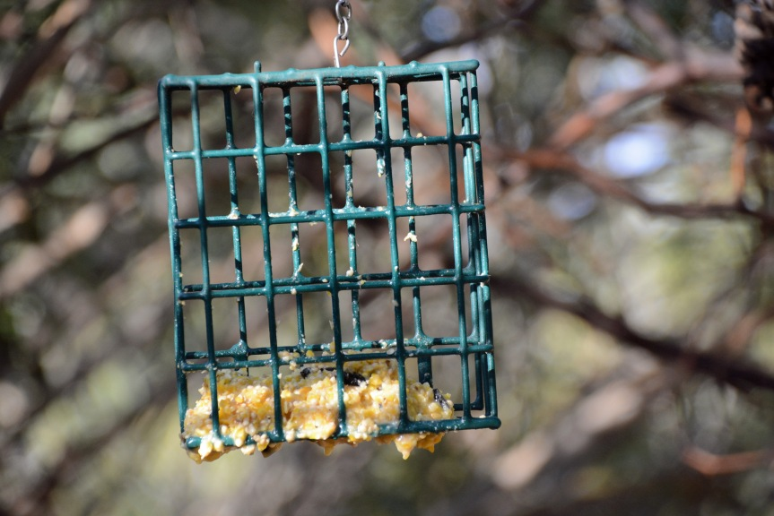 Suet Melted